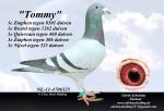 afbeelding Tommy.jpg